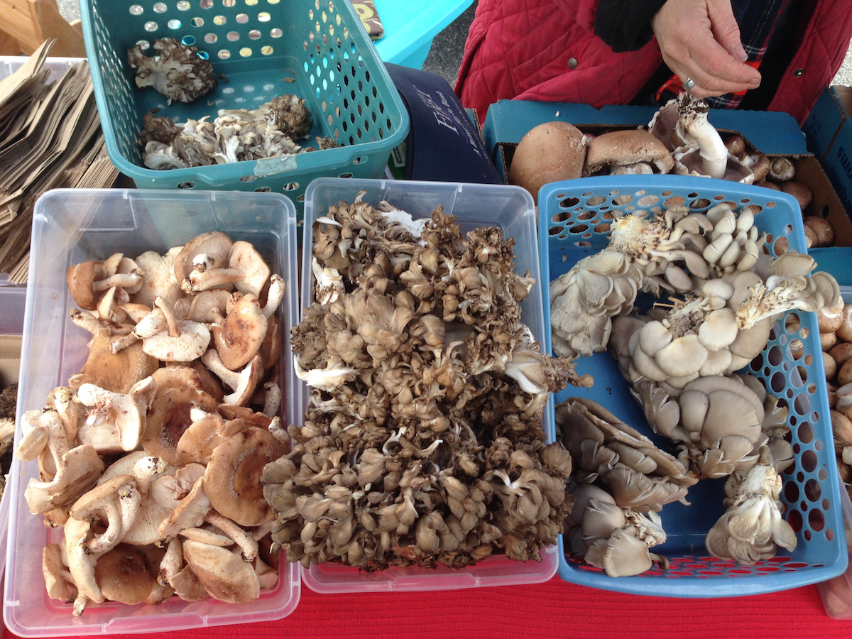 Farmers Market Finds: shiitake and oyster mushrooms