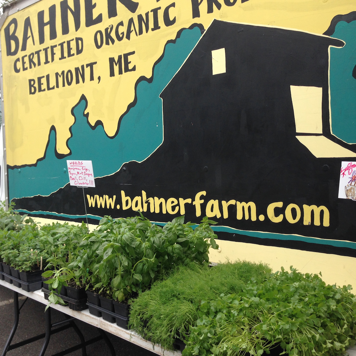 Farmers Market Finds: herb plants cilantro and basil and more